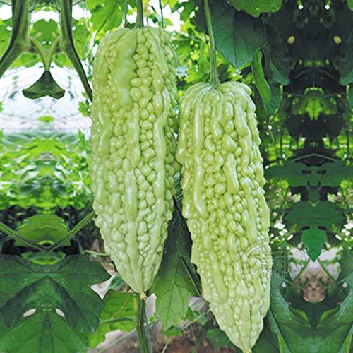 Mara Long Variety - (OP) - Momordica charantia - Semi non OGM (Verde)