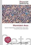 Wernicke's Area: Superior Temporal Gyrus, Cerebral Cortex, Broca's Area, Arcuate Fasciculus, Human Brain