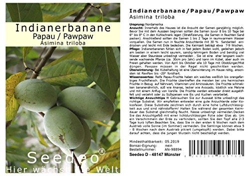 Seedeo Indianerbanane/Papau/Pawpaw (Asimina triloba) 3 Samen BIO