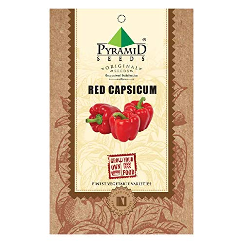 Pyramid Seeds Red Capsicum Seeds (50 Seeds)