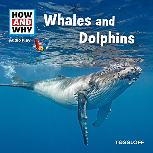 Whales And Dolphins Titelbild