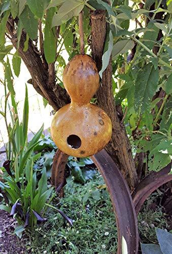 GO Jardin Birdhouse Graines de courge, préférés pour nichoirs et Crafters.