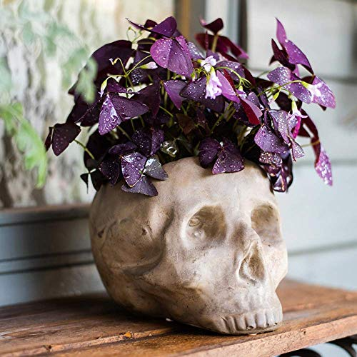 Cement Skull Head Succulent Planter Flower Herb Pot,Skeleton Halloween Style Prop Home Party Kits for Outdoor Decoration