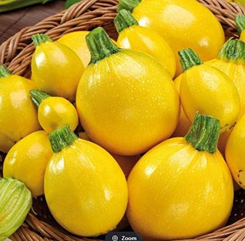 Soteer Garten - 20 Stück Zucchinisamen 'One Ball, F1' Gemüsesamen Zucchetti Samen ertragreich winterhart mehrjährig für Garten Balkon/Terrasse