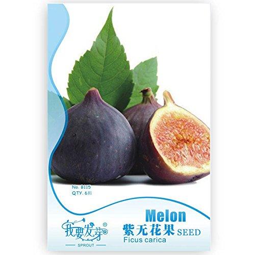 graines de figuier pour les graines jardin figues violettes, les graines Ficus carica Je veux pousser l'emballage d'origine, 6 particules/paquet