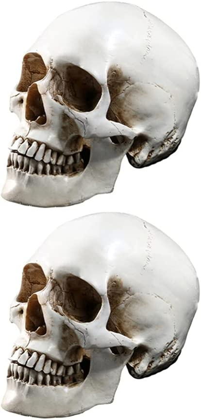Amosfun Halloween Life Size Human Shipping included Skull 2Pc- Decors Model 1 Max 50% OFF L 1:
