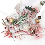 2 cajas de flores secas para resina, plantas secas para aromaterapia, vela, jabón, arte de uñas y resina epoxi colgante para hacer joyas (estilo aleatorio)