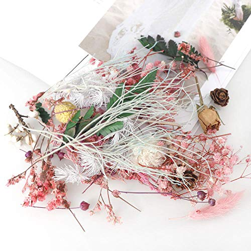 Flores Secas Para Resina Y Mesa flores secas  Marca DriSubt