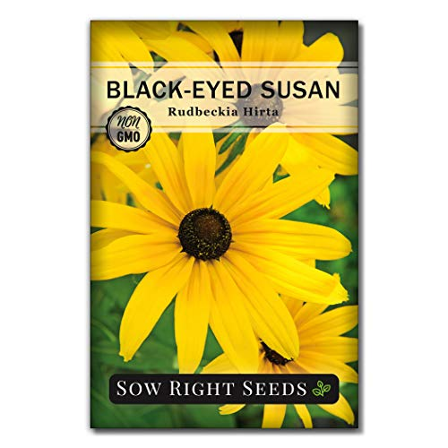 Sow Right Seeds - Black Eyed Susan Flower Seeds for Planting, Beautiful Flowers to Plant in Your Garden; Non-GMO Heirloom Seeds; Wonderful Gardening Gifts (1)