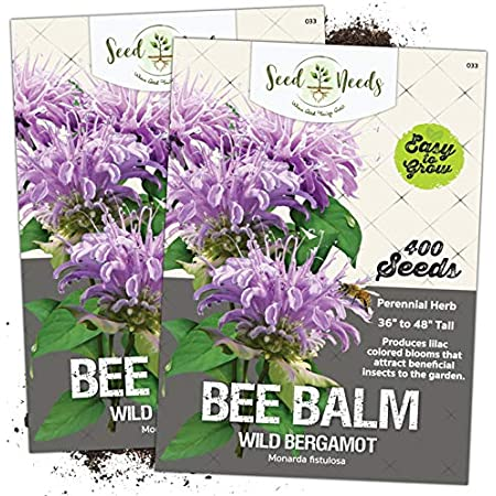 Seed Needs, Wild Bee Balm (Monarda fistulosa) Twin Pack of 400 Seeds Each