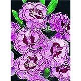 200個、カーネーション鉢植えバルコニーコートヤードガーデンフラワーフローレス植物、M愛の花:15