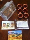 Mini-Gewächshaus - Die Wüste lebt.! - mit Samen vom Lebenden Granit, Moringa und Wüstenrose