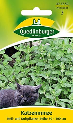 Katzenminze Quedlinburger Saatgut Samen 493752