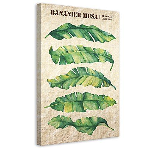 Vertikale Décoration Murale Tableau Toile Feuilles de Bananier Musa Style Botanique 40 x 60 cm