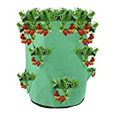 Bolsa para Plantas de Fresa con Bolsas de Plantación Laterales Bolsas de Cultivo de Fresa Tela no Tejida Bolsa para Plantar para Fresa Papa, Zanahoria, Tomate y Cebolla (10 Galones)