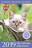 Katzen-Tageskalender 2019
