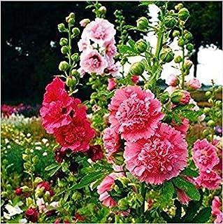 。花の種子:チャーター'Sダブルホリホックオペアンプシードパケット(17個のパケット)庭の植物の種子
