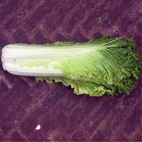 AGROBITS 200 graines/Hot Pack! Délicieux chou graines faciles à cultiver - Graines de légumes verts nourrissants ica Pekinensis s: chou A4