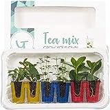 Seville Farms The Gardians Tea Mix Herbs, 6 Pack, Green