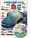 DVD付 新版 魚