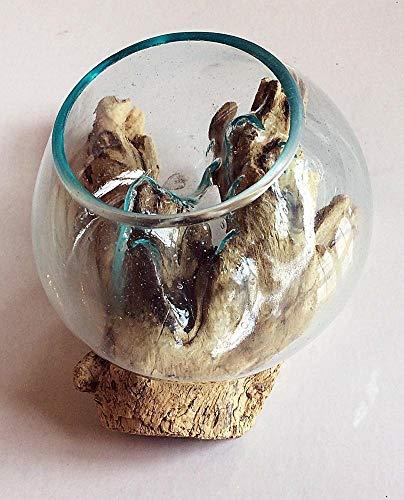 F&G Supplies Mooie 15cm glazen vaas kom ingewikkeld geblazen op een teak wortel - ideaal voor bloemen of een indoor terrarium - elk uniek