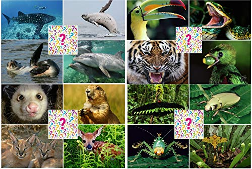 SURPRISE-PAKET 3-D-Postkarten: 25 St. hochwertige Lentikular-Postkarten mit Tier- und Naturmotiven - ideal für Sammler, Schule oder Postcrossing
