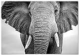 Panorama Poster Elefante 30x21cm - Impreso en Papel 250gr - Poster de Animales - Cuadros de Animales Decorativos - Cuadros de Salón Modernos - Cuadros Decoración Dormitorio