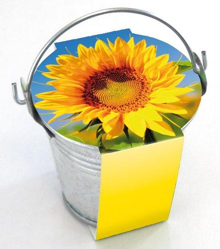 10er Set Zinkeimerchen Zwergsonnenblume