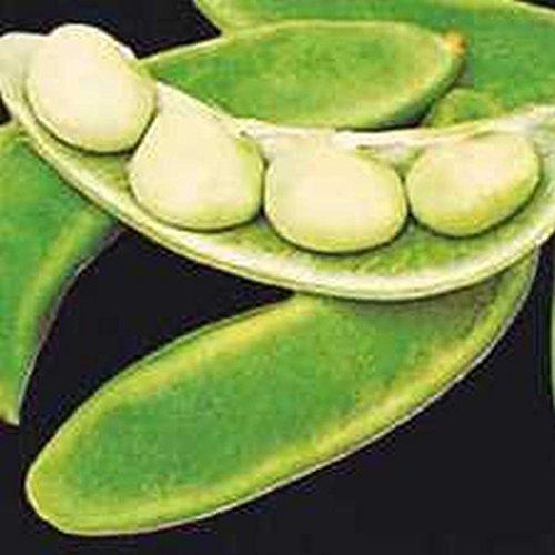 Portal Cool 10 - Seeds: Willow Leaf Lima Beans - Drought And Heat Resistance Variety10 - Semillas: Alubias de hoja de sauce - Variedad de resistencia a la sequía y al calor