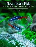 Neon Tetra Fish: 12 Of The Best Tank Mates for Neon Tetras
