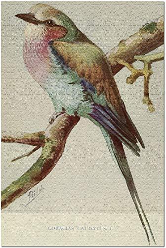Romance-and-Beauty Birds - The 1921 Avicultural Magazine - Ex libris Vintage -...