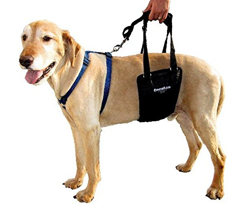 GingerLead Dog Support and Rehabilitation Harness