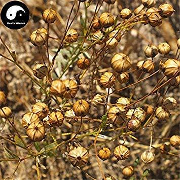 Potseed Keimfutter: 250pcs: Kaufen Herb Leinsamen Pflanze Chinese Lium Usitatissimum Leinsaat für Ya Ma