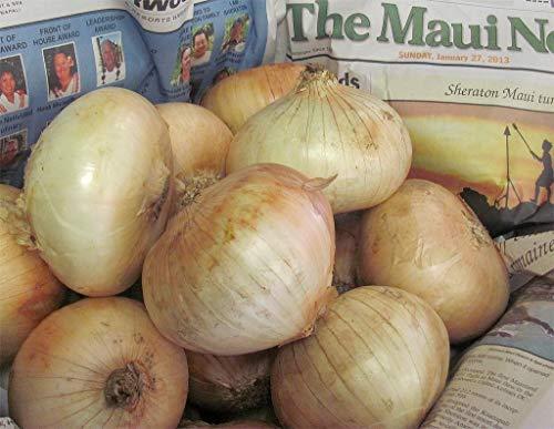 GEOPONICS New Maui Sweet Onion Bio Non-GMO Samen Short Tag/Fl Seeding 600+ Seeds