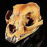 Luxdeoo Simulación Arte Modelo Resina Artesanía Cabeza de Perro Cráneo Taro Molde médico Calavera de Halloween Esqueleto Calavera Decorativa Decoraciones de Halloween