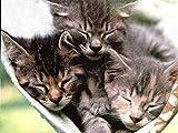Rompecabezas de 500 piezas, tres gatitos durmiendo en una hamaca, rompecabezas para adultos de 500 piezas, rompecabezas para niños, decoración del hogar de adultos