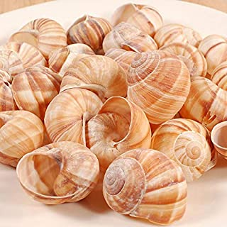 Cavair Line Escargot Snails Empty Giant Shells – 24 pcs – Extra Large..