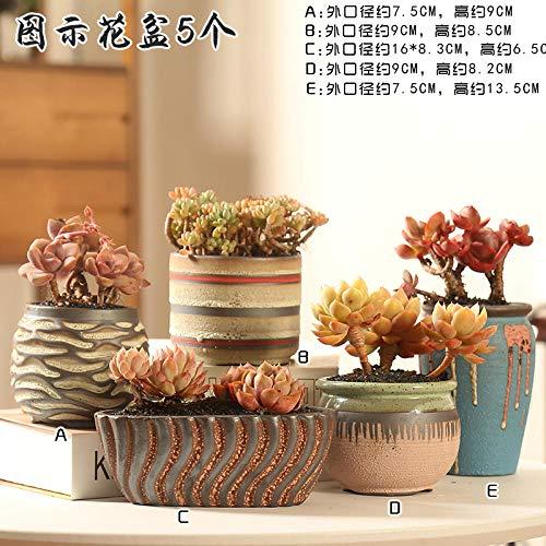 CTDMMJ Saftiges Keramiksteinzeug aus Keramik-Fünf Yijing Blumentöpfe_Klein
