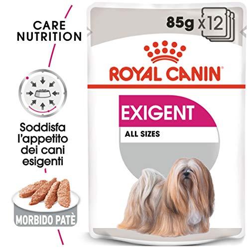 EXIGENT Royal Canin Cibo Umido per Cane 12 X 85 g Stimola l'appetito dei Cani più esigenti