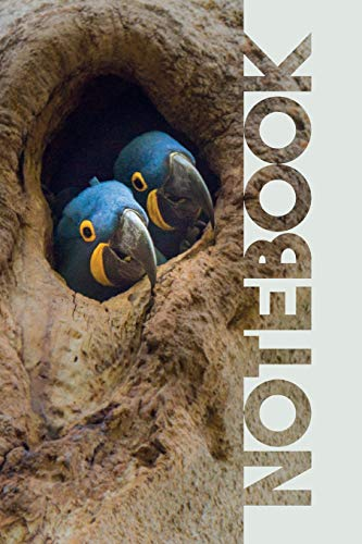 Notebook: Hyacinth Macaw Cool Composition Book for Fans of Parrot Types