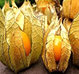 Big Pack - Ground Cherry, physalis Family, tomatillo Seeds - Non-GMO Seeds (Ground Cherry (1,000 Seeds))