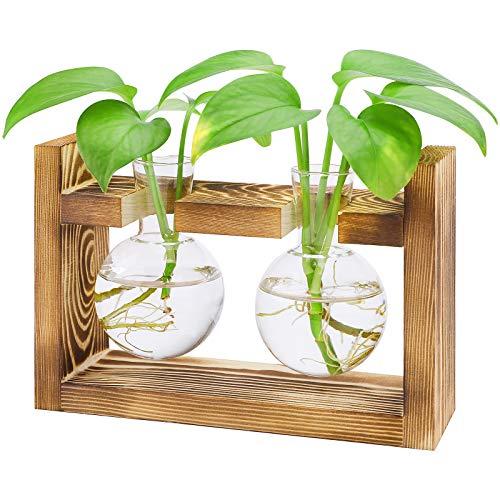 Jarrón de cristal Hydroponic para terrario, transparente, con soporte de madera vintage,...