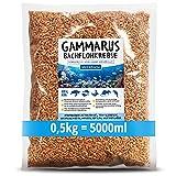 MeerBach Animal Gammarus Bachflohkrebse getrocknet, 5000ml...