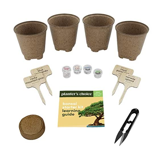 Bonsai Starter Kit - The Complete Growing Kit to Easily Grow 4 Bonsai Trees from Seed + Comprehensive Guide & Bamboo… 5 Everything needed to grow 4 beautiful bonsai trees - in one sleek box: Contains 4 types of seeds (Rocky Mountain Bristlecone Pine, Black Poui, Norway Spruce, and Flame Tree) stored in seed-safe vials for better germination, 4 biodegradable growing pots, 1 expanding-soil disc, 4 bamboo plant markers, 1 bonsai clipper and a beautiful, comprehensive and simple instruction booklet. #1 growth performance: Our rating speaks for itself! Planter's Choice is the only brand that stores the seeds in our seed-safe vials to ensure proper germination. The perfect diy gift: For mom, dad, him or her, this is the perfect gift to give on birthdays, anniversaries, holidays, housewarming, or any other occasion — ideal for beginners, masters, and children alike. See the excitement in their eyes as they experience growing indoor bonsai trees.