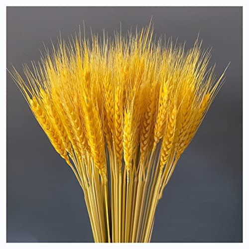 LZPQ Tallos De Trigo Secos Naturales, Paquetes De Tallos De Tallos De Trigo Secos, para Arreglos De Mesa De Comedor En Casa, Decoración De Flores para Bodas