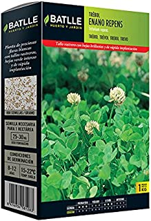 Mejor Semillas Fito Seeds de 2020 - Mejor valorados y revisados