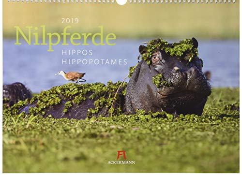 Nilpferde 2019, Wandkalender im Querformat (45x33 cm) - Tierkalender mit Monatskalendarium PDF Books