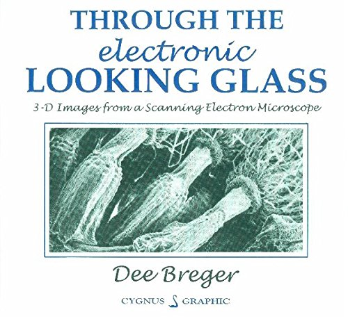 Through the electronic looking glass: 3-D images from a scanning electron microscope