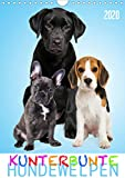 Kunterbunte Hundewelpen (Wandkalender 2020 DIN A4 hoch)