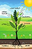 Biology Notebook: Process of Photosynthesis | Plants | Look Learn Memorize Thanks to Your Notebook | Useful Item to School for Kids Teens Young Adults ... | 100 Graph Pages (School Subject Notebooks)